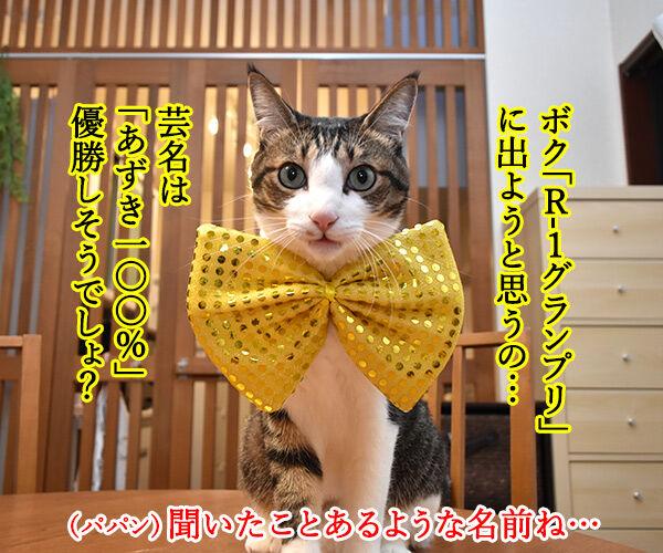 『R-1ぐらんぷり』に出たいのよッ 猫の写真で4コマ漫画 1コマ目ッ