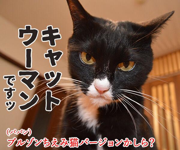 『ブルゾンちえみ』猫バージョン??? 猫の写真で4コマ漫画 2コマ目ッ