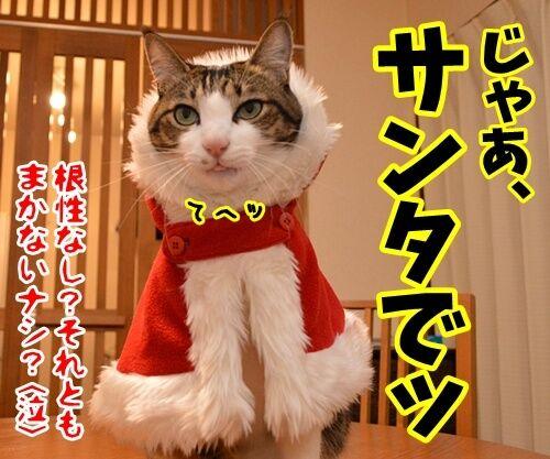 クリスマスにはサンタさんに会いたいの 猫の写真で4コマ漫画 4コマ目ッ