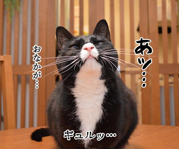 おなかがギュルッ 猫の写真で4コマ漫画 1コマ目ッ