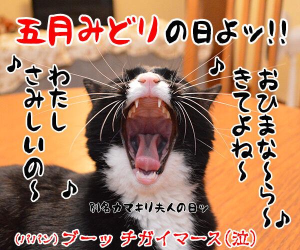 今日は何の日でしょうかッ? 猫の写真で4コマ漫画 4コマ目ッ