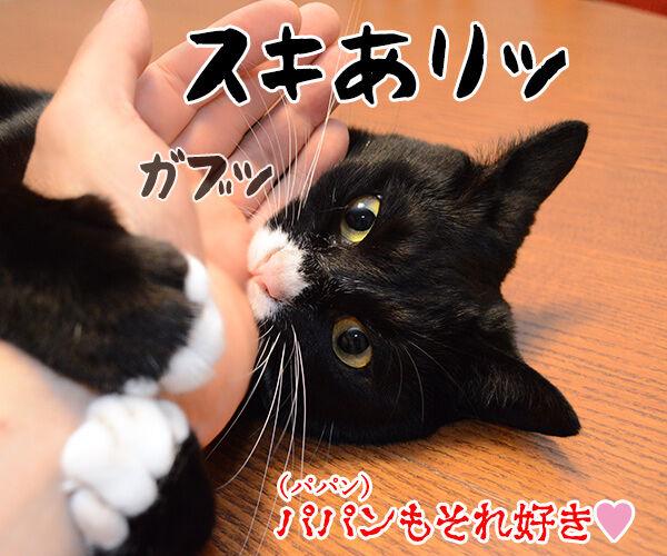 好きな所はあるかしら? 猫の写真で4コマ漫画 4コマ目ッ