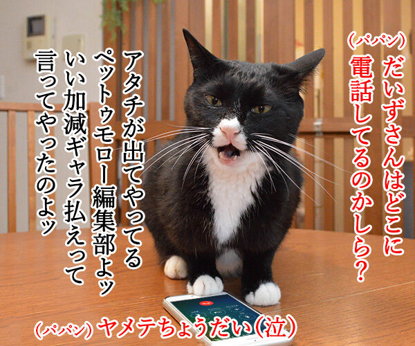 PETomorrowはオモローッ 猫の写真で4コマ漫画 2コマ目ッ