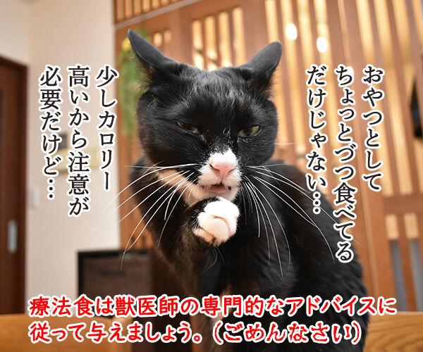 猫さんに多い病気は慢性腎臓病(腎不全)なのよッ 猫の写真で4コマ漫画 5コマ目ッ