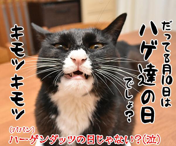 今日限定でステキなプレゼントがもらえる『○○○の日』 猫の写真で4コマ漫画 4コマ目ッ