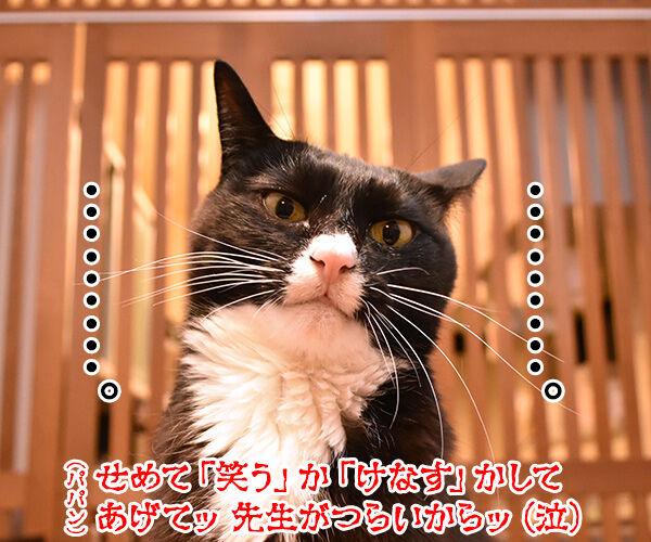 エビキャッチ 其の四 猫の写真で4コマ漫画 4コマ目ッ