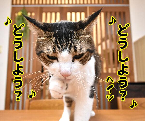 4コマのネタが思いつかない時は唄うのよッ 猫の写真で4コマ漫画 3コマ目ッ