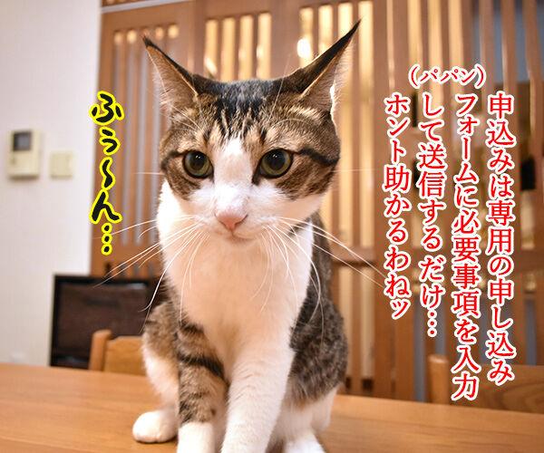 コロナ感染者のペットを無償で預かってくれるんですってッ 猫の写真で4コマ漫画 3コマ目ッ