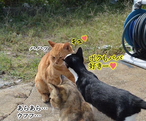 猫島 其の五 猫の写真で4コマ漫画 3コマ目ッ