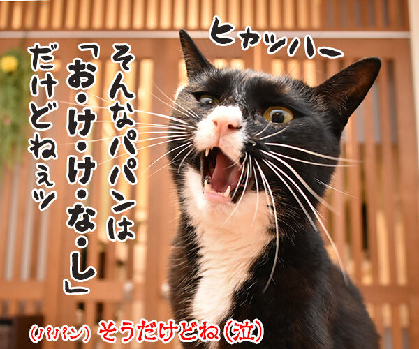 小泉進次郎さん 滝川クリステルさん ご結婚オメデトゴザマース 猫の写真で4コマ漫画 4コマ目ッ