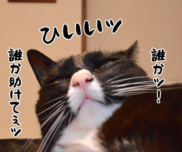 猫侍 其の三 猫の写真で4コマ漫画 2コマ目ッ