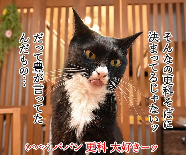 そば職人にアタチなるッ 猫の写真で4コマ漫画 3コマ目ッ