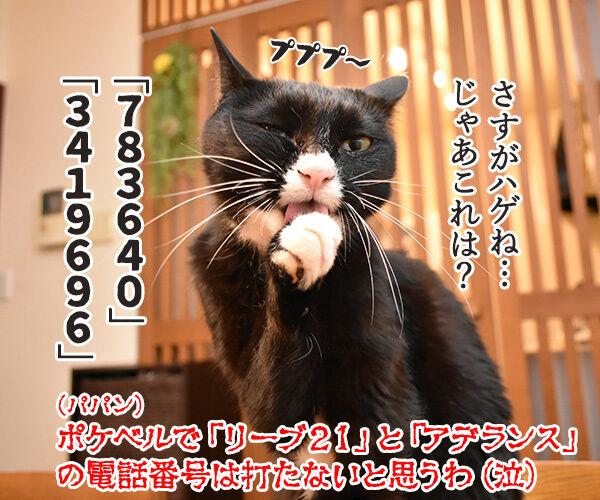 ポケベルが鳴らなくて ポケベルのサービスが終了しちゃったのよッ 猫の写真で4コマ漫画 4コマ目ッ