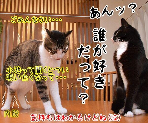 石田純一氏、東京都知事選に出馬断念 猫の写真で4コマ漫画 4コマ目ッ