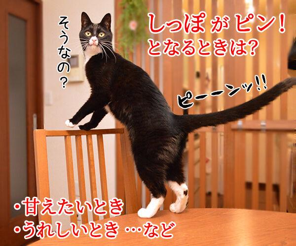 猫のピーン!はどんなきもちかしら? 猫の写真で4コマ漫画 1コマ目ッ