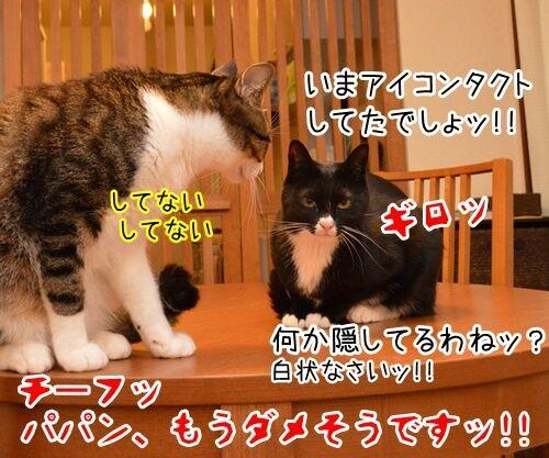 出来レース 猫の写真で4コマ漫画 4コマ目ッ