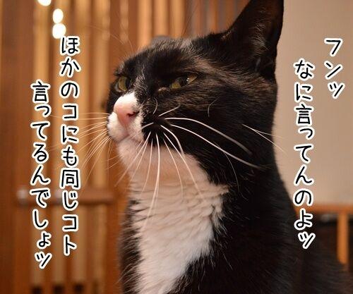 告白されたけど 猫の写真で4コマ漫画 2コマ目ッ