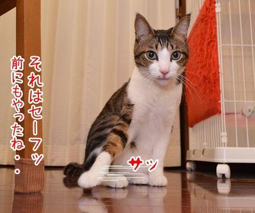 二年目のほうふ 猫の写真で4コマ漫画 2コマ目ッ