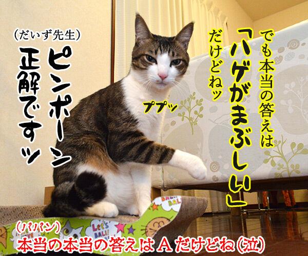 教えてッ だいず先生ッ 其の一 猫の写真で4コマ漫画 4コマ目ッ