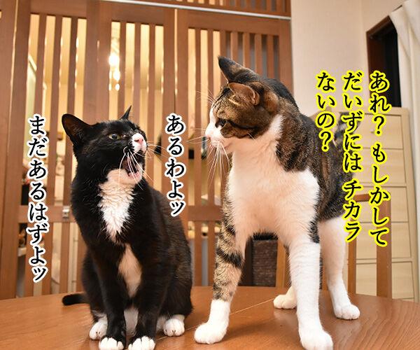 わたしの力をとくと見るがよいッ 猫の写真で4コマ漫画 3コマ目ッ