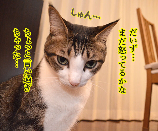 ケンカしちゃった 猫の写真で4コマ漫画 1コマ目ッ