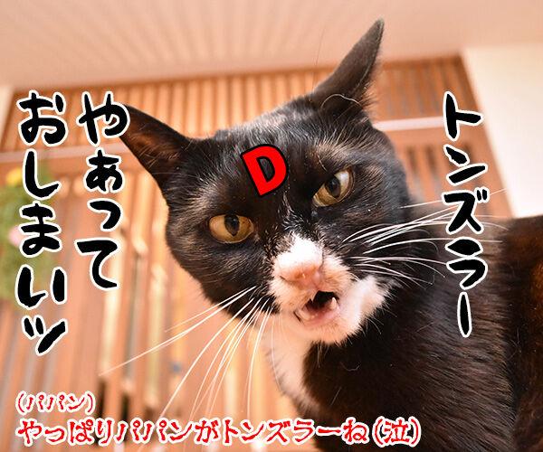 そんなにボヤいてると…… 猫の写真で4コマ漫画 5コマ目ッ