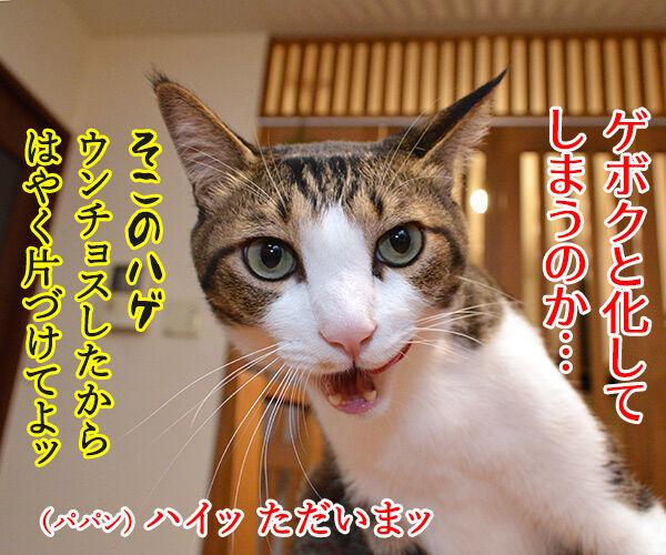 下僕な理由がわかったの 猫の写真で4コマ漫画 2コマ目ッ