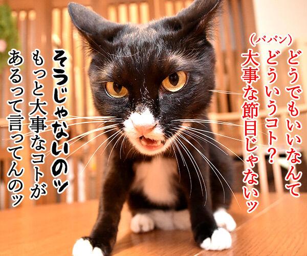 今日から5年目突入デースッ 猫の写真で4コマ漫画 3コマ目ッ