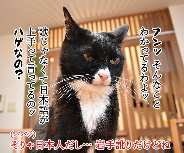 ある演歌歌手のはなし 猫の写真で4コマ漫画 3コマ目ッ