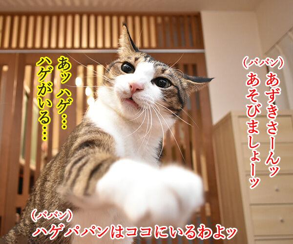 パパンは東京のハゲ… 猫の写真で4コマ漫画 1コマ目ッ