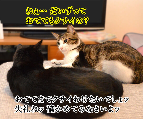 疑惑 其の二 猫の写真で4コマ漫画 1コマ目ッ