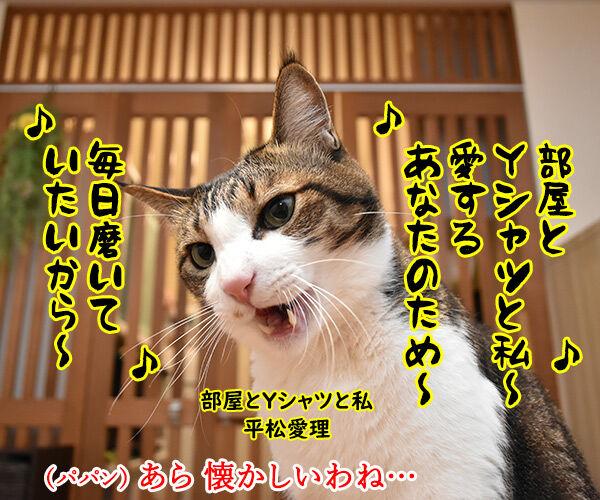 「部屋とYシャツと私」の続編が出てたのよッ 猫の写真で4コマ漫画 1コマ目ッ