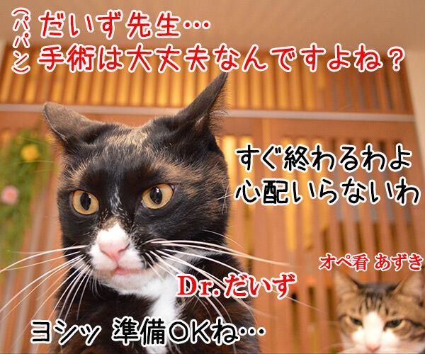 Dr.だいず 猫の写真で4コマ漫画 1コマ目ッ