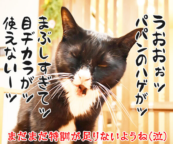 猫目ヂカラ王にッ おれはなるッ 猫の写真で4コマ漫画 4コマ目ッ