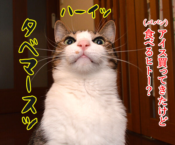 アイス買ってきたけど食べる? 猫の写真で4コマ漫画 1コマ目ッ