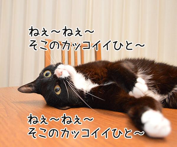 ねぇねぇ~ ねぇってばぁ~ 猫の写真で4コマ漫画 1コマ目ッ