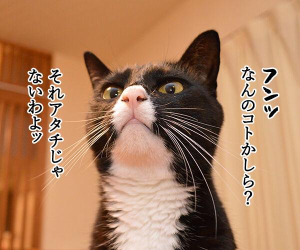 するつもり 猫の写真で4コマ漫画 2コマ目ッ