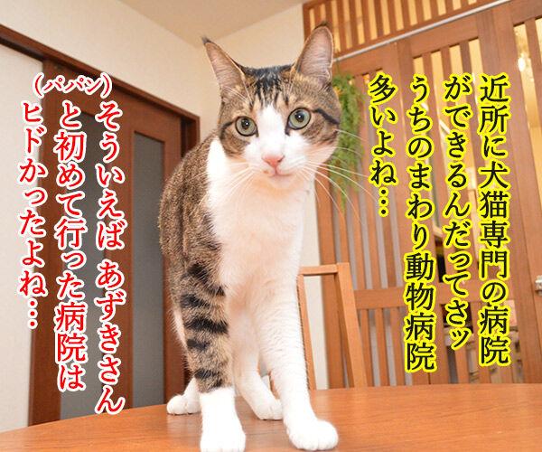 動物病院といえば想い出す 猫の写真で4コマ漫画 1コマ目ッ