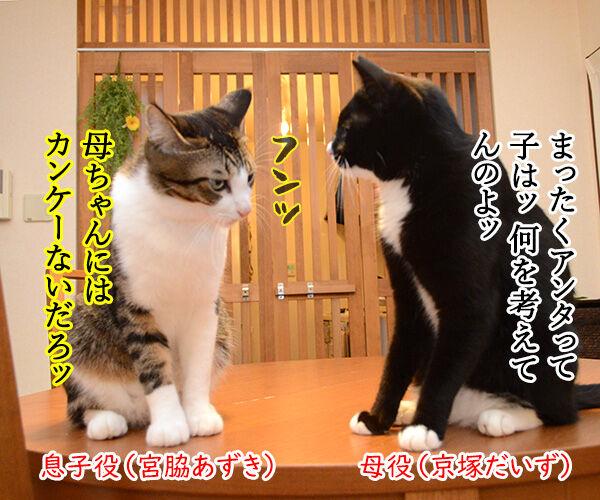 あずだいテレビ小説『おかあちゃん』 猫の写真で4コマ漫画 1コマ目ッ