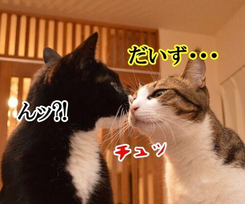 ナツカCM 其の一 猫の写真で4コマ漫画 3コマ目ッ
