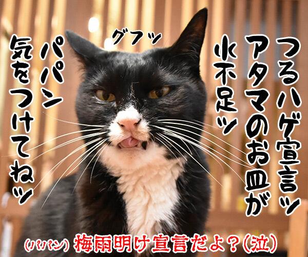 関東甲信地方は梅雨明けなんですってッ 猫の写真で4コマ漫画 4コマ目ッ