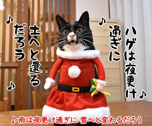 メリークリスマスだからパパンのために唄うのよッ 猫の写真で4コマ漫画 2コマ目ッ