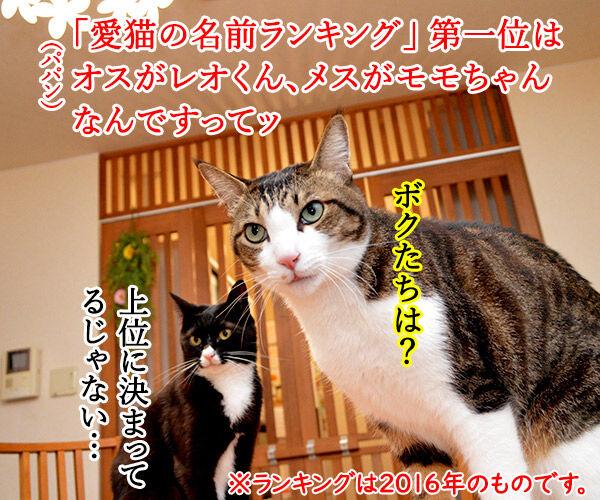 愛猫の名前ランキング発表ッ 猫の写真で4コマ漫画 1コマ目ッ