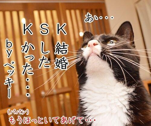 KSK 猫の写真で4コマ漫画 2コマ目ッ