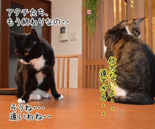 突然の別れ 猫の写真で4コマ漫画 3コマ目ッ