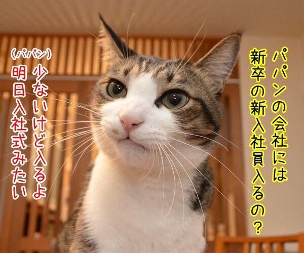 新入社員っていいよね 猫の写真で4コマ漫画 1コマ目ッ