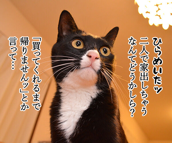 作戦会議 猫の写真で4コマ漫画 3コマ目ッ