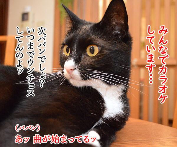 夏の扉 猫の写真で4コマ漫画 1コマ目ッ