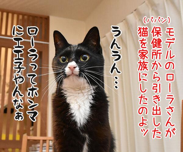 ローラさんが保険所から猫を引き取って家族にしたんですってッ 猫の写真で4コマ漫画 1コマ目ッ