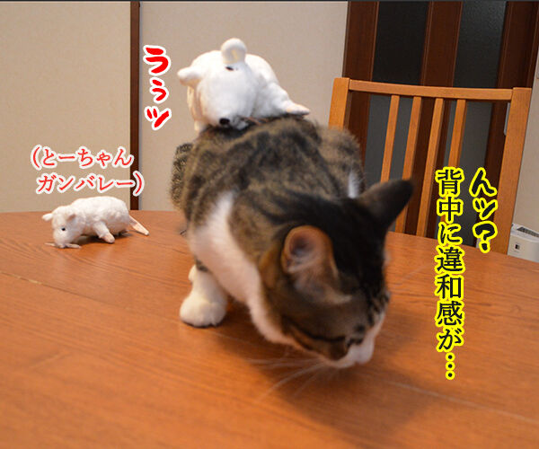 いたずらしちゃおッ 猫の写真で4コマ漫画 3コマ目ッ